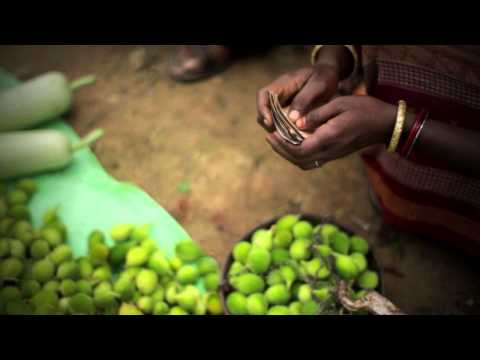 Lives of Others | Sustainable Agriculture in India