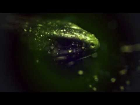 Showtek - 90s By Nature (feat. MC Ambush) (Tujamo Remix)