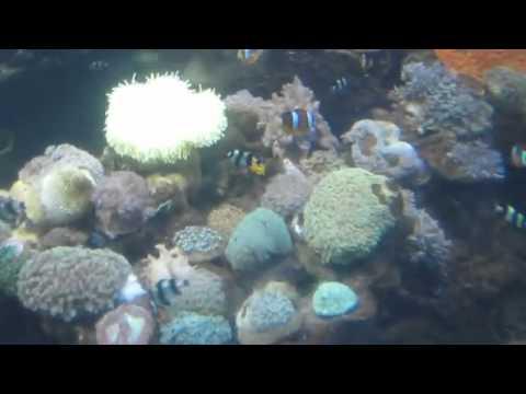 Sea World On Ride Attraction Sea World Ancol,Indonesia,Jakarta.