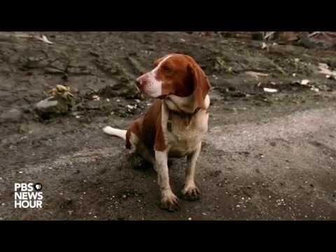 How Did Hurricane Katrina Change The Way We Evacuate Pets From Devastation?