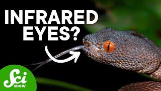 9 Weird Ways Animals See the World