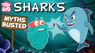 Sharks – Myths Busted | The Dr. Binocs Show | Educational Videos For Kids