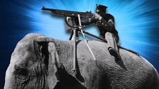 Savaşta Silah ve Casus Olarak Kullanılan 10 Hayvan