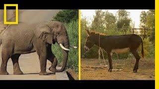 Elephant or Donkey? How Animals Became U.S. Political Symbols