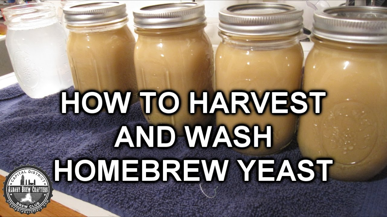 What Is Yeast Cake Homebrew