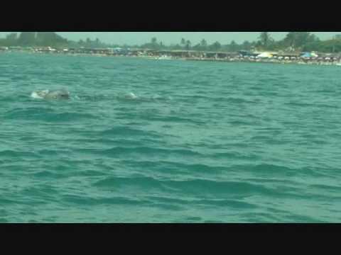 Delfines en Chachalacas Veracruz