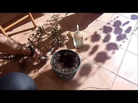 Reproducir una planta con el truco de la abuela