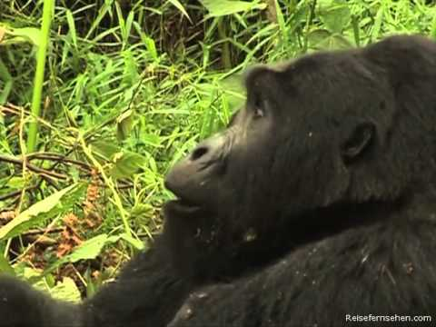 Uganda by Reisefernsehen.com - Reisevideo / travel video