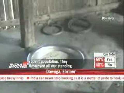 Mizoram facing food crisis due to rats