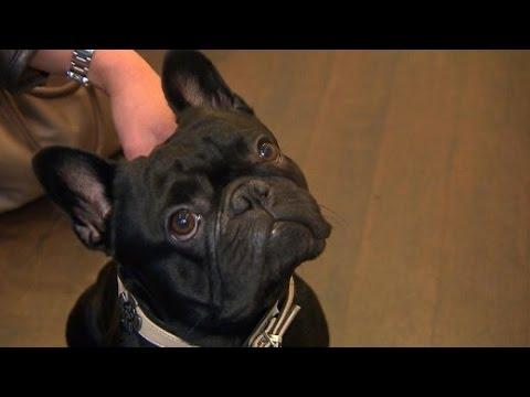 Schöne Bescherung: Weihnachtsgeschenke für Hunde
