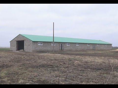 Нижнекамский фермер на деньги за победу в конкурсе строит новый коровник
