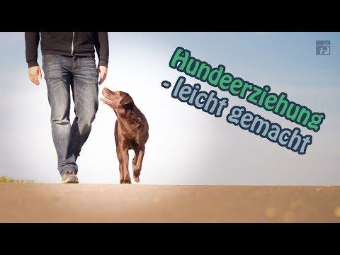 Hundeerziehung - leicht gemacht!