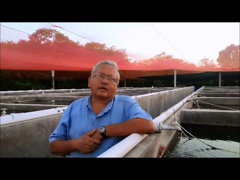 Entrevista empresa de producción de peces de ornato