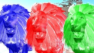 Learn Colours With Lion Colourful Colour Song || 3D Animation Popular nursery Rhymes For Children