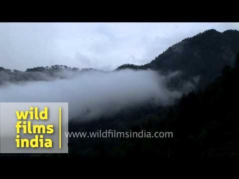 Misty hills of Solan, Himachal Pradesh