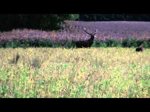 hirschjagd-ungarn-2011-red-stag.html