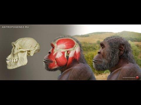 Эти таинственные ранние Homo. Станислав Дробышевский