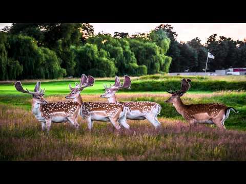 Hampton court palace golf club Wimbledon London