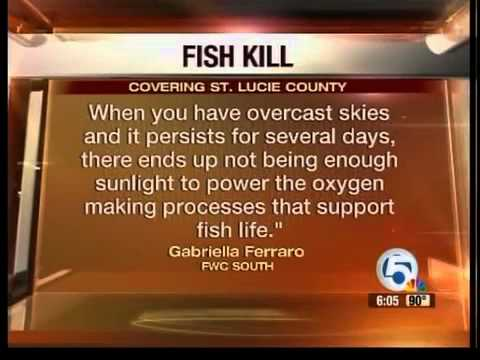Fish dying rapidly in Port St. Lucie
