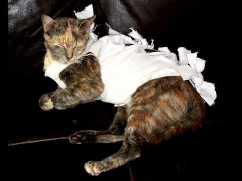 Tu mi-ai maltratat pisica - Pentru Bije ( Lautareasca pamflet)