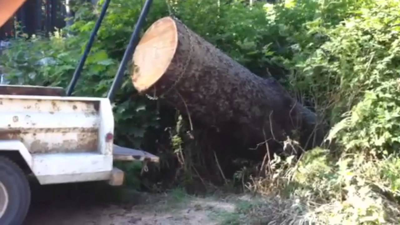 Lewis Winch Lifts Massive Log Into Truck Powerful