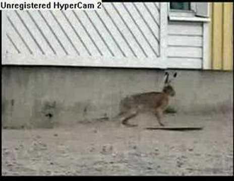 how to kill a rabbit
