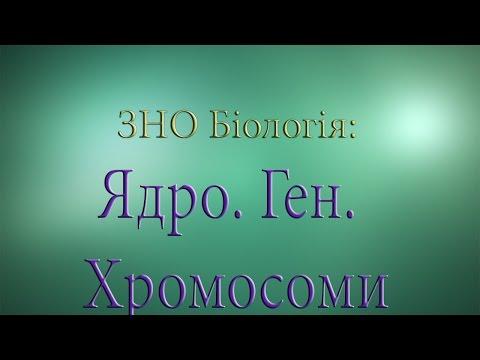 ЗНО Біологія  Ядро  Ген  Хромосоми