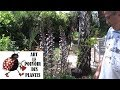 Chaine Tv De Jardinage Acanthe Mollis Comment Faire Un Semis Plante Vivace mp3
