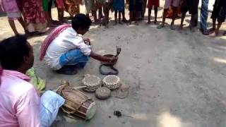 Snake play on village with song  ( saper khela )