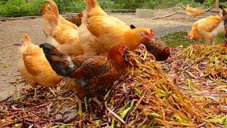 Finding Free Livestock Food