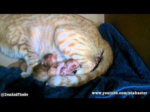 Cat Gives Birth To 7 Kittens video