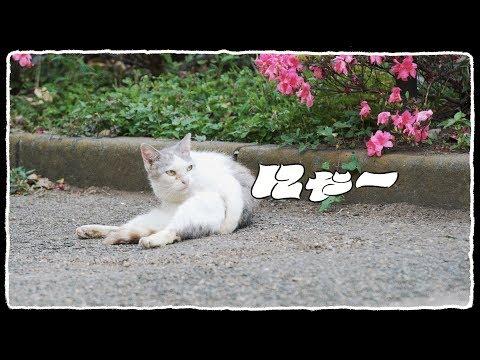 U-zhaan×環ROY×鎮座DOPENESS / にゃー feat.矢野顕子 (07月23日 13:30 / 195 users)