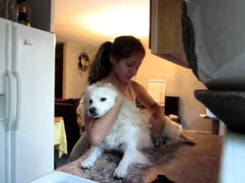 Vet Tech Dog Restraint Practice Youtube