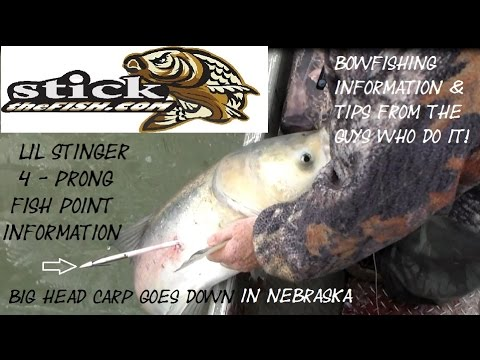 Best Fish Point Tip Lil Stinger 4 prong for bow fishing how to hold a fish with fish arrow