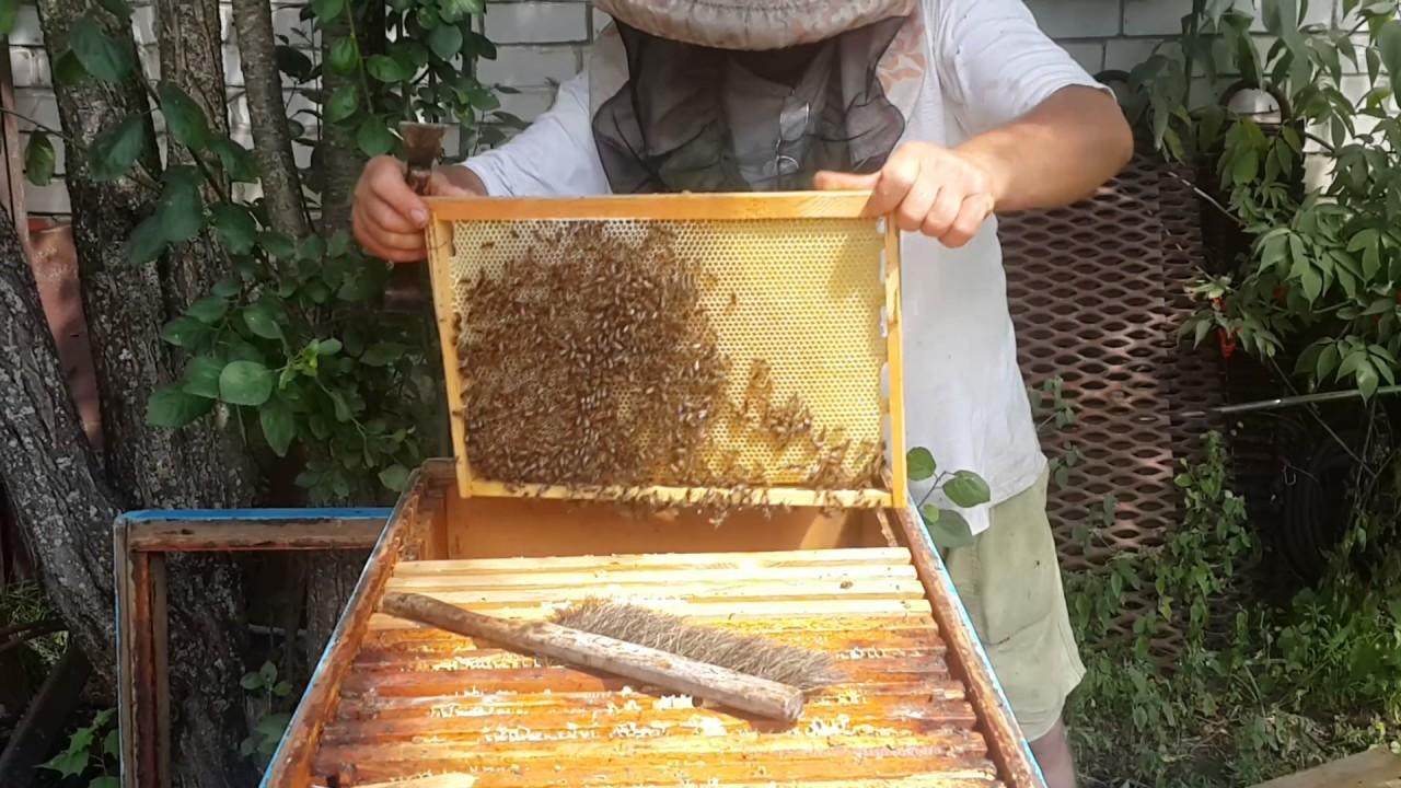 Разведение пчел видео согласен