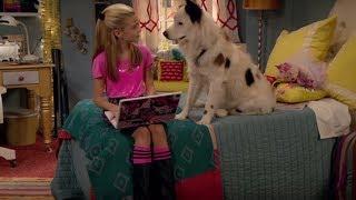 Собака точка ком - Все серии подряд (Сезон 1 Серии 13,14,15) l Комедийный сериал Disney