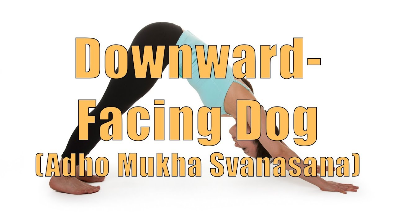 Dog Doing Yoga Downward Dog Hatha Yoga Downward Facing Dog