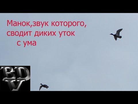 Скачать звуки уток и гусей