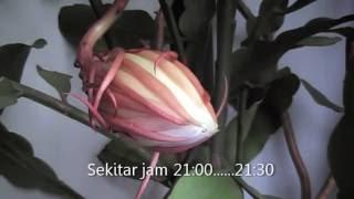 download lagu Bunga Wijaya Kusuma. gratis