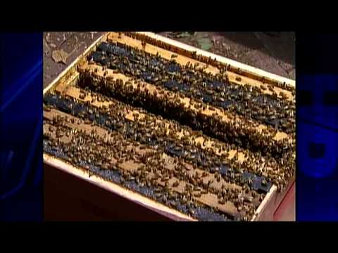 Groups Try To Save Honey Bee By Rescuing Hives
