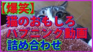 【爆笑】猫のおもしろハプニング動画 詰め合わせ