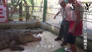 SIC 台南鱷魚王