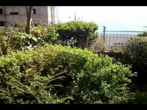 Apartment For Rent In Haeundae, Busan South Korea video