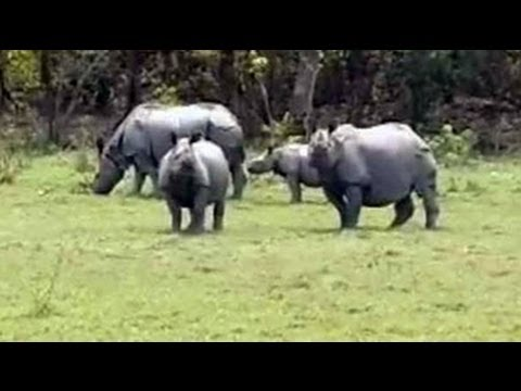 In Kaziranga, worry over increasing rhino poaching