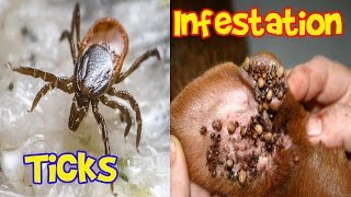 Ticks Infestation Ticks in Humans and Animals