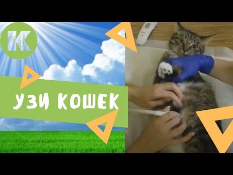 Как сделать кошке узи 650