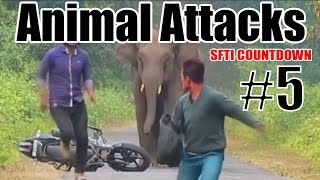 Top 10 Animal Attacks - Countdown #5 - SFTI (Sorry for Interruption) - Comedy One