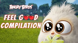 Angry Birds | Feel Good Compilation 1