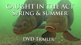 Caught In The Act Parts 1 & 2 - DVD Full Trailer & Intro