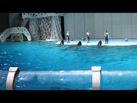 The Orca - September Moskvarium